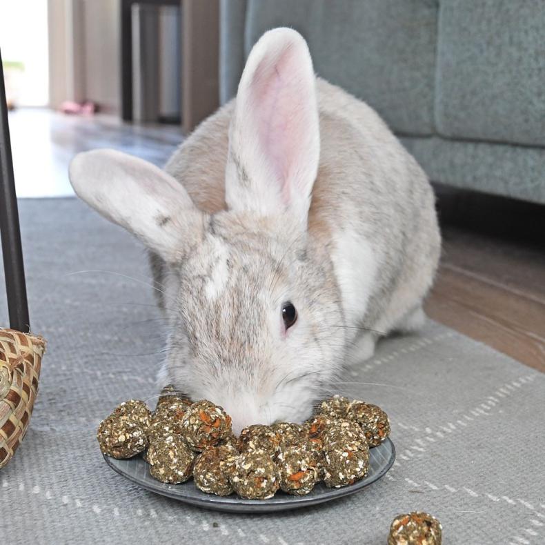 Zelfgemaakte konijnensnoepjes